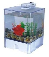 Aqua Betta Box & Light 2 3L Battery Powered Aquarium from Den