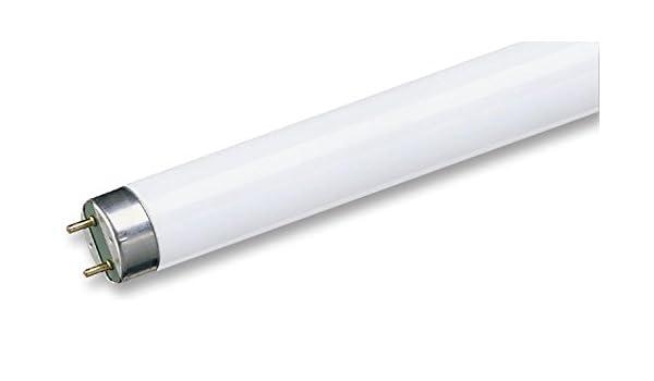 Lot de 25 marque certifi/é Philips 63171840/Lampe T8/600/mm 18/W 4000/K