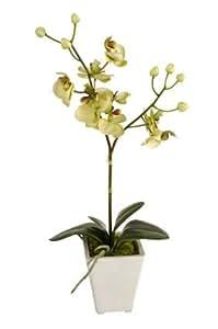 Orchidée: env. 40 cm avec 2 brins en godets vert tendre