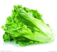 Salade de laitue semences de légume ferme jardin légumes organique 100 T074