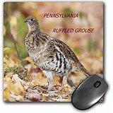Grouse Bird (Florene State Birds - Pennsylvania State Bird Ruffled Grouse - MousePad (mp_50924_1))
