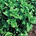 Just Seed Heritage Saatgut, Spinat/ Neuseeländer Spinat, 70 Samen von Just Seed auf Du und dein Garten