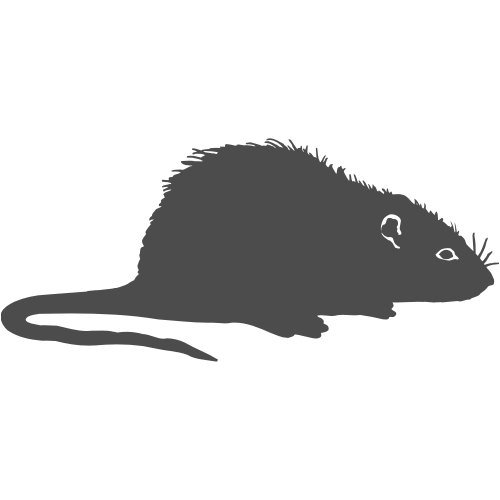 ratte-aufkleber-001-15-cm-anthrazit