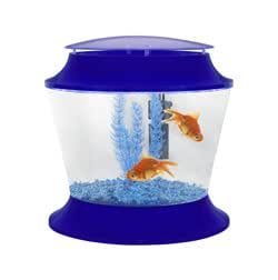 starter set goldfisch aquarium ideal f r kinder blau haustier. Black Bedroom Furniture Sets. Home Design Ideas