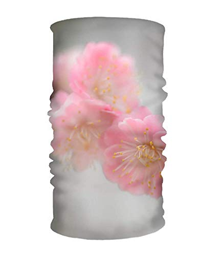 Original Multi-Style Headband Roses Butterflies Sweatband Perfect for Yoga or Fashion Workout or Travel Antique Rose Farm
