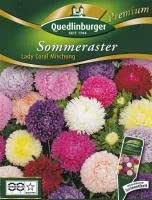 Sommeraster Lady Coral Mischung Premium