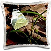 ET Photography - A Small Yellow Butterfly A yellow butterfly on top of brown leaves - 16x16 inch Pillow Case (Leaf Top Butterfly)