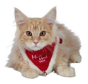 'Ho Ho Ho' Christmas Neckerchief Collar for Cats/Dogs