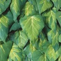 Hedera colchica 'Sulphur Heart' S-Pot ® 75 cm 5 branches