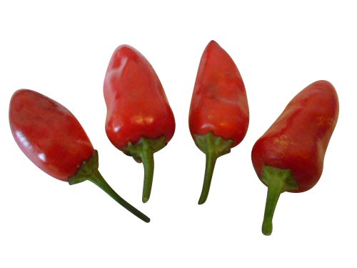 Feuerküsschen Hot (Firekiss) 10 Samen