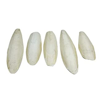 """Large Natural Cuttlefish for Birds, 5.5 to 8"""" (13-20cm), Pack of 5, by Britten & James 16"""