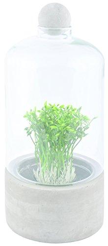 Esschert Design Anzuchtflasche Betonschale L aus Beton und Glas, 15,5 x 15,5 x 33,7 cm