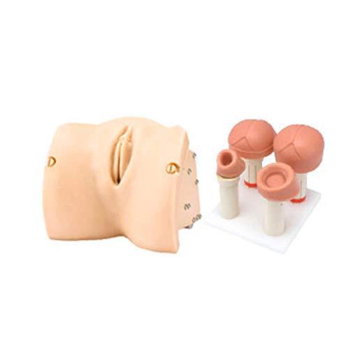 Erler Zimmer Geburtsstadien Modul, Muttermund, Fetuskopf Ergänzung zu Geburtssimulator LM101B - Baby Simulator