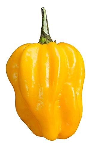 Habanero Samen (Freie Farbwahl-rot,braun,gelb,orange und weiss) (Zählen zu den schärfsten Chilis der Welt) 10 Samen (Braun)