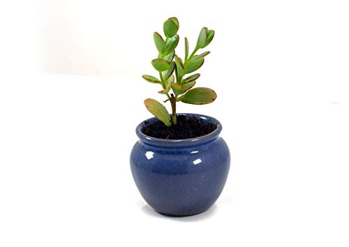 Star Gardens Handi Blue Ceramic Pots for Indoor & Outdoor Plants, Planters for Table top or Office Desk Table, Succulent Pots, Balcony & Decoration Ceramic Pot, Ceramic Pot Without Plant SG-CER-009