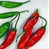 PLAT FIRM GRAINES DE GERMINATION: 100 - Graines: Diente de Perro Hot Pepper - Graines Eine Vielzahl von Guatemala !!!!.