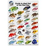 Red Sea Reef Fish Species I.D. Card - Waterproof