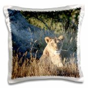 angelique-cajam-big-cat-safari-young-female-lion-searching-for-food-16x16-inch-pillow-case