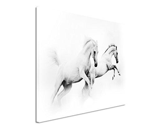 XXL Fotoleinwand 120x80cm Künstlerische Fotografie – Zwei weiße Pferde auf Leinwand exklusives Wandbild moderne Fotografie für ihre Wand in vielen Größen