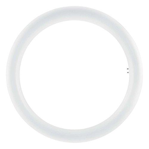 Osram Tubo circular LED, 20 W, Blanco