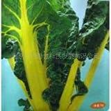 AGROBITS Zier-und essbaren GemüsespezialitäTen Blattgold RüBen Bonsai kontinuierlich Bonsais 100pcs