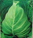 New Seeds 2015! 10 Samen / Los, seltene Regenbogen Zitrone Samen Bio-Obst Zitronenbaum Samen Hausgarten Obstpflanzen bunt Bonsai, # 9E8