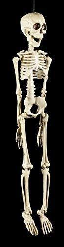 Kunststoff Skelett Figur 50 cm | Halloween Deko Totenkopf Schädel | zum Hängen