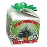 Grow Your Own – Mini Christmas Tree