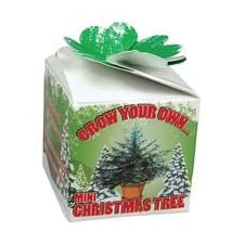 Grow Your Own – Mini Christmas Tree