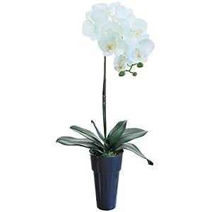 Flores Artificiales de Orquídeas, Phalenopsis con Maceta, Contiene Musgo Preservado, Ideal para Decoración de Hogar (2 Orquídeas, Crema)
