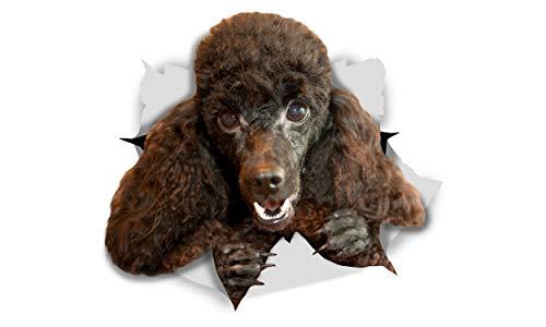 Winston & Bear 3D Hund Aufkleber - 2er-Pack - glücklich schwarzer Pudel für Wand, Kühlschrank schwarzer Pudel Hund Aufkleber