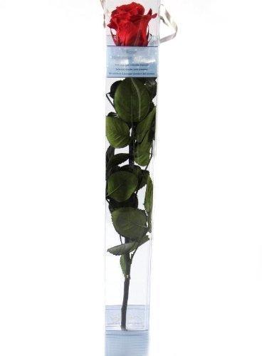 unvergangliche-rose