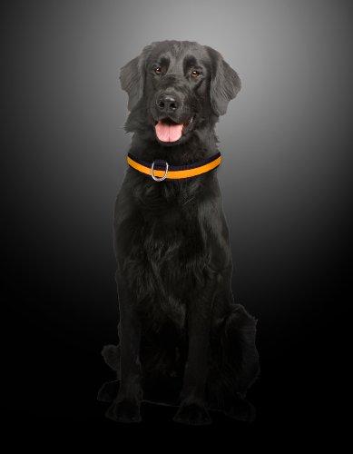 """Hunde Leuchthalsband LED Halsband Hundehalsband Hunde-Halsband """"Zandoo"""" Leuchthalsband inkl. Batterie für Hunde Katzen Haustiere in der Farbe orange Größe M (ca. 40-50 cm) NEU von der Marke PRECORN - 2"""