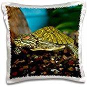 Turtles - Ornate Red Ear Slider turtle - David Northcott - 16x16 inch Pillow Case