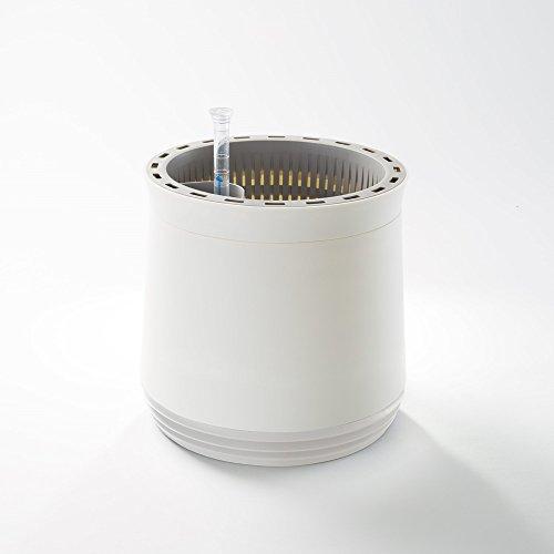 AIRY POT - innovadora maceta purificadora de aire 100% eficaz - Purificador de aire natural con plantas de interior sin electricidad ni químicos (Snow White)