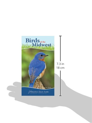Birds of the Midwest (Adventure Quick Guides)
