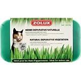 Erba a gatto dépurative naturale a coltivare, zolux