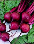 premier-seeds-direct-bet06-beetroot-ruby-queen-finest-seeds-pack-of-400