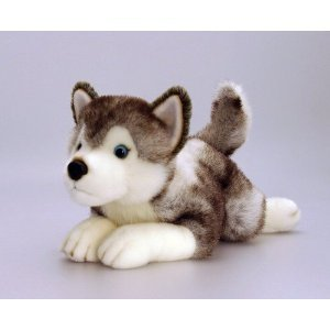 Present Deluxe Storm Husky 35cm Soft Plush Dog by Keel Toys - Looks Real and Feels Real Husky - A Great Gift for Husky Lovers
