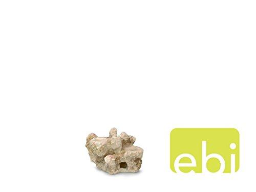 Europet Bernina 234-426098 Aquariendekoration Aqua Della Coral-Reef, 15 x 10 x 10 cm für 2 Korallen - Reef Aquarium Dekoration Coral