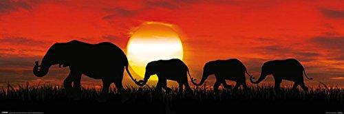 Close Up Póster Horizontal - Elefantes al Atardecer (91,5cm x 30,5cm) +...