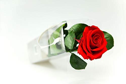 Rosen-Te-Amo - Konservierte echte rote Rose: Unvergängliche Blume mit Grußkarte zum Herunterladen; Infinity Rosen - Deko und Geschenk in neue verstärkte Verpackung