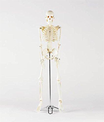 patterson-esqueleto-de-ferrocarril