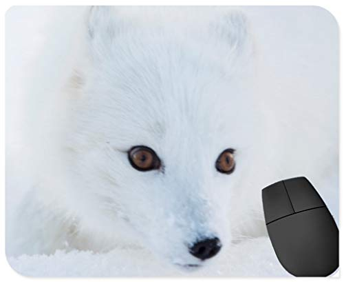 rutschfeste Gummi-Rechteck-Mausunterlagen,Nahaufnahme von einem wei?en Polarfuchs Gesicht und Augen Holz