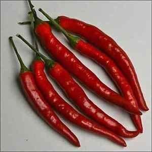 Keim Seeds: Pfeffer Cayenne Lange rote Gemüsesamen (Capsicum Annuum) 100Seeds -