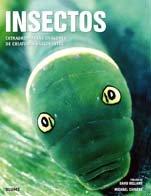 Insectos: Extraordinarias imágenes de criaturas fascinantes
