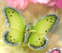 Sophie's Favors Schwimmende Kerzen, Schmetterlingsmotiv, Grün, 6 Stück (Grüne Schwimmende Kerzen)