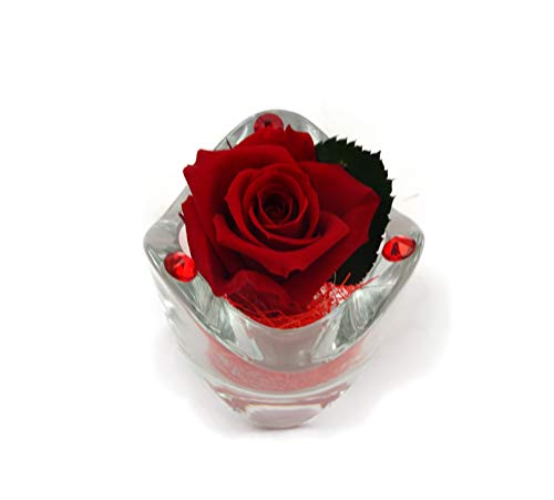 Rosabella_rosa vera stabilizzata con elementi swarovski (rosso)