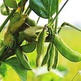 Homegig 100 semillas de soja gigante verde Edamame