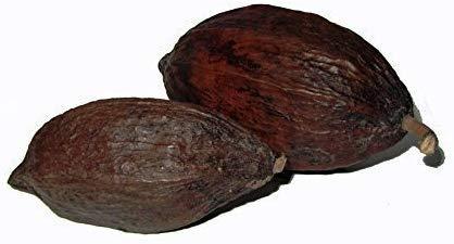 CleanPrince 1 Stück echte ganze Kakaoschote